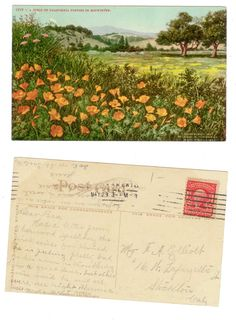 california poppies postcard.