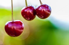 Check out Red cherries by ChristianThür Photography on Creative Market Drink Photo, Cherries, Food And Drink, Fruit, Creative, Check, Red, Pictures, Photography
