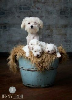 Proud mama and her bucket of new puppies.