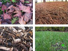 Beneficios del acolchado | Plantas