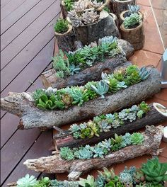 Træstammer som urtepotter
