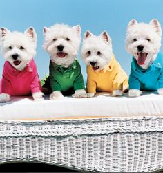 Pet set: Ralph Lauren Polo shirts for dogs in playful colors