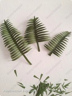 feuilles de kantia