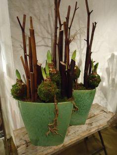 Schale mit Amaryllis Blumen Renner Lörrach