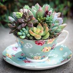 ☕️❤️ • • • • • • • #succulove #color #succulents #cactus #suculentas #life #floral #pastel #spring #craftsposure #greenthumb #friendship #green #etsy #california #handmade #community #vintage #love #wedding #gardening #flowers #nature #plants #girly #heart #tea #Godscreation #coffee #thursday