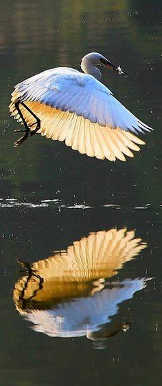 Egret fishing in Guizhou, China • photo: liangdawei on 1x
