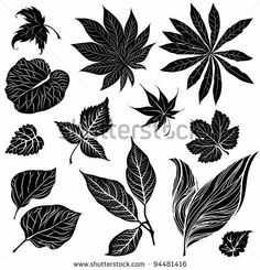 Vector set of black floral design elements - leafs by Kynata, via Shutterstock