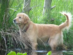 Ponderings from the Pond 2 -