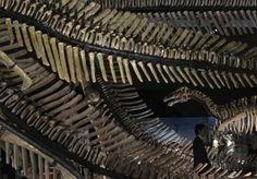 A man walks past replicas of dinosaur skeletons at the Dinokingdom exhibition at Makuhari Messe in Chiba, east of Tokyo, July 20, 2012. The dinosaur exhibition goes on until September 23, 2012. REUTERS-Kim Kyung-Hoon