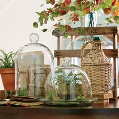 Garden-Fresh Décor for Every Space: A delicate glass terrarium is the ideal showcase for your favorite ​plant life.