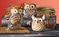 Owl you need is Harvest Decor from Shopko.com