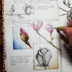 Botanical Drawings, Botanical Art, Botanical Illustration, Nature Sketch, Nature Drawing, Bullet Journal Art, Art Journal Pages, Sketchbook Inspiration, Art Sketchbook