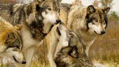 Image result for endangered animals
