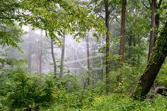 Sommerregen im Laubwald -  auf http://ronni-shop.fineartprint.de
