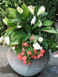 Embellece cualquier espacio con macetas | Cuidar de tus plantas es facilisimo.com