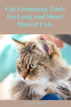 Although cats groom themselves regularly, it is a good idea to do regular grooming sessions. Here we discuss benefits of reglar grooming for cats and some recommended cat groom tools