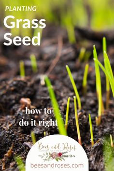 Dad always said it's best to plant grass when it's cold. How cold? Well, actually not THAT cold! It's true that new grass seed doesn't like scorching heat, but it does need warm temps. Find out the ideal temperature to plant grass seed and other tips and tricks to make your planting a big success! #beesandrosesblog #grassseedplanting #grassplanting Fall Lawn Care, Lawn Care Tips, Full Sun Landscaping, Landscaping Ideas, Palm Tree Types, Planting Grass Seed, Organic Lawn Care, All About Plants, Lawn Fertilizer