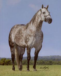 Greyt Whiz by Topsail Whiz