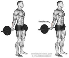 Behind the back barbell wrist curl. An isolation forearm exercise. Target muscles: Wrist Flexors. Synergistic muscles: None.