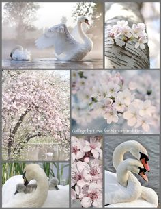 Mood board collage inspiration swans spring time blossoms