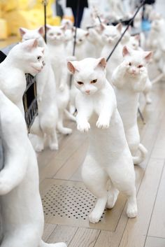 五美大展の「大猫行列」がたまらない可愛さだと注目を集める | netgeek