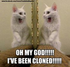 Oh My God!!!! I've been cloned!!!!