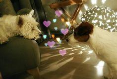 #Lucky and #Gijsmans love valentine