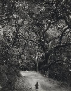 Wynn Bullock - Child on a Forest Road, 1958