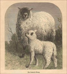 Diseño en Valais BLACKNOSE SHEEP Juego de 4 Manteles Individuales