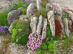 Alpine setting for rockery plants.