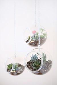 Peceras para plantas