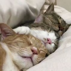 Cute Cats And Kittens Baby Kitty Faces Funny Animal Videos, Cute Funny Animals, Cute Baby Animals, Animals And Pets, Funny Cats, Pet Videos, Cats Humor, Funny Horses, Wild Animals