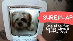 SureFlap pet door flap by Sure Petcare, Secure dog flap that operates with your pets own microchip, for small dogs ie shih tzu, Malshi or cat flap - Installi. Pet Door, Shih Tzu, Small Dogs, Pet Care, Your Pet, Cats, Animals, Gatos, Animales