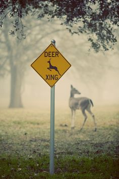 """Photographer: Katya Horner  """"deer xing"""""""