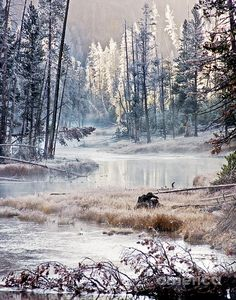 Neige Hiver : ❤️*❤️Winter Scene ✮ Winter Wonderland in Yellowstone National Park Winter Photography, Nature Photography, Yellowstone Nationalpark, Yellowstone Park, Yellowstone Winter, Visit Yellowstone, Winter Szenen, Photos Voyages, Snow Scenes