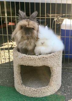 Camping bunnies