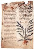 The medical practitioner in Anglo-Saxon England - Medievalists.net