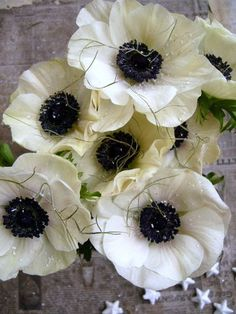 Ranunculus, Anemones, Marie, Home And Garden, Plants Pattern, Floral, Nature, Flowers, Nashville