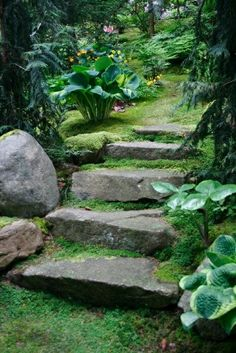 מדרגות בתוך הדשא