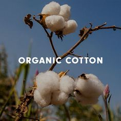 A big part of environmentally-friendly clothing is organic cotton, and we only use Organic Cotton for our ethically-made clothing. Environmentally Friendly Clothing, Sustainable Clothing, Made Clothing, Organic Cotton, My Style, Clothes, Clothing, Kleding, Outfit