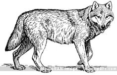 Cool Wolf Coloring Pages Printable. On this page, you will discover the wolf coloring pictures. The wolf is a spectacular and mysterious animal! Camping Coloring Pages, Horse Coloring Pages, Coloring Pages To Print, Adult Coloring Pages, Coloring Sheets, Wolf Clipart, Wolf Walking, Wolf Colors, Fluffy Cows