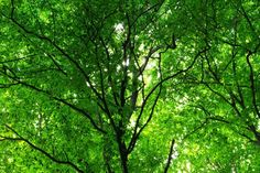Green Forest in Spring - Tapetit / tapetti - Photowall