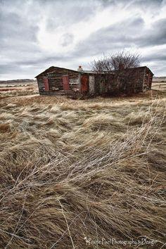 Abandoned ranch among prairie grass