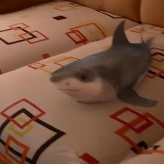 Animals And Pets, Baby Animals, Funny Animals, Cute Animals, Funny Memes, Baby Hai, Dancing Baby, Great White Shark, Funny Animal Pictures