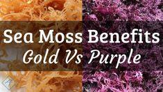 Benefits of Irish Sea Moss: Gold Sea Moss Vs Purple Sea Moss Seamoss Benefits, Health Benefits, Health Tips, Food Shopping List, Moss Plant, Sea Vegetables, Irish Moss, Shops, Irish Sea