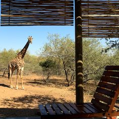 Birdsong Africa Lodge.  SELF-CATERING+ACCOMMODATION+AT+KRUGER Marloth Park.