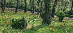 Parco Giardino Sigurtà, Tulips