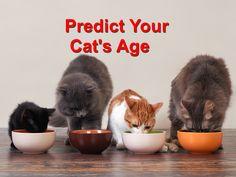 Predict your Cat's Age - Champion Wood Animal Hospital Cat Ages, Wood Animal, Closer, Champion, Pets, Animals, Animals And Pets, Animales, Animaux