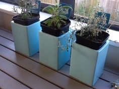 DIY Tiffany Blue Herb Pots ~ Our Always & Forever