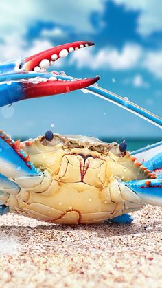 colorful crab sea creature wallpaper for #Iphone and #Android at Wallzapp.com